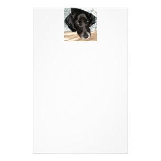 Oreo the English Springer Spaniel Dog Stationery