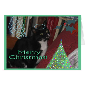 Oreo the Sweet Wonder Cat Card