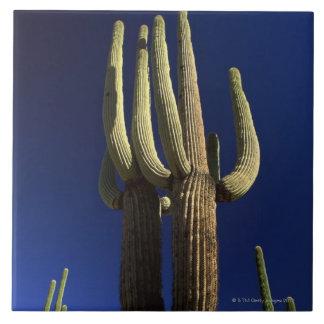 Organ pipe cactus national monument in Arizona Tile