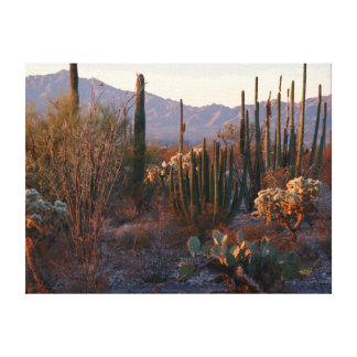 Organ Pipe National Monument Canvas Print