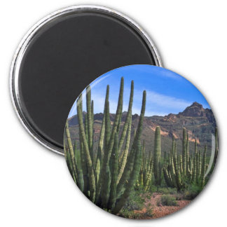 Organ Pipes In Desert Magnets