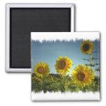 Organic Garden Sunflower Magnet Refrigerator Magnet