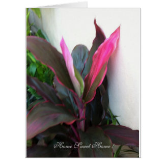 Organic Plants In Our New Home, Greeting Card