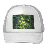 Organic Tomatoes Hat