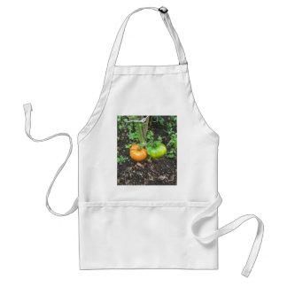 Organic Tomatoes Standard Apron
