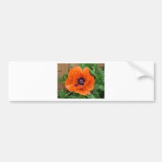 Oriental Garden Poppy Bumper Sticker