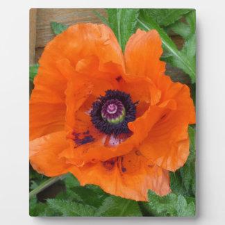 Oriental Garden Poppy Plaque