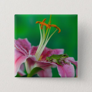 Oriental Lily and Pacific tree frog resting on 15 Cm Square Badge