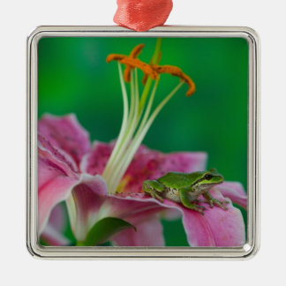 Oriental Lily and Pacific tree frog resting on Christmas Ornament