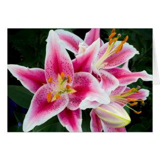 Oriental Lily Closeup in Full Bloom Card