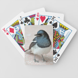 Oriental Magpie-Robin (Copsychus saularis) Bicycle Playing Cards