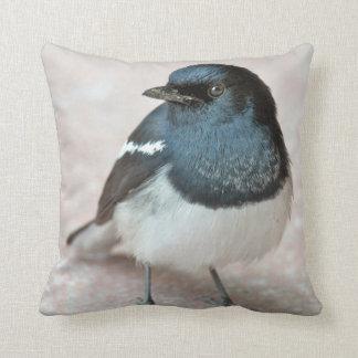 Oriental Magpie-Robin (Copsychus saularis) Cushion