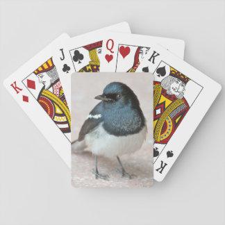 Oriental Magpie-Robin (Copsychus saularis) Playing Cards