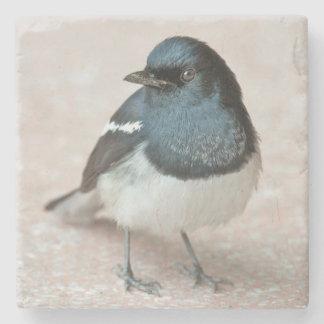 Oriental Magpie-Robin (Copsychus saularis) Stone Coaster