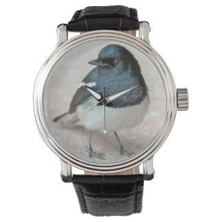 Oriental Magpie-Robin (Copsychus saularis) Wristwatch