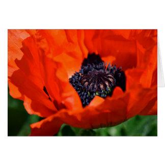 Oriental Poppy Card