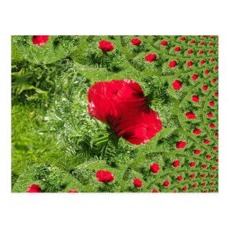 Oriental Poppy Fractal Postcard