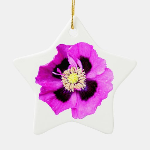 Oriental Poppy ornament star white