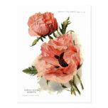 Oriental Poppy (Papaver orientale) Postcard