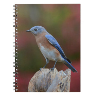 Original Bluebird Notebook