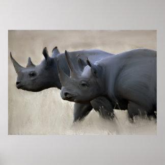 Original Rhino Brothers Poster