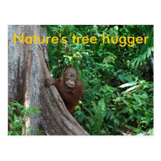Original Tree Hugger Borneo Nature Postcard