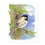 Original Watercolor Chickadee in Pine Tree Postcards