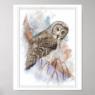 Original Watercolor Great Grey Owl Bird Poster