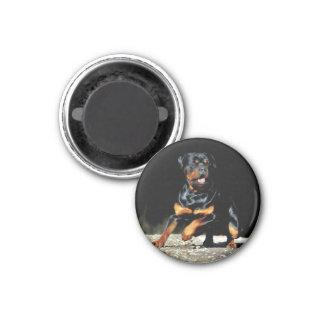 Originals Rottweiler magnet