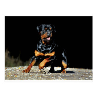 Originals Rottweiler Postcard