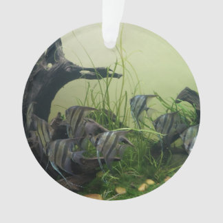 Orinoco Angelfish Ornament