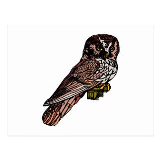 Orion Owl Postcard