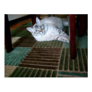 orlando under table postcard