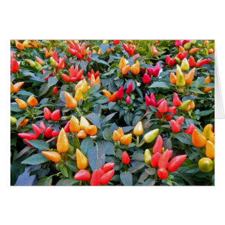 Ornamental Peppers Note Card