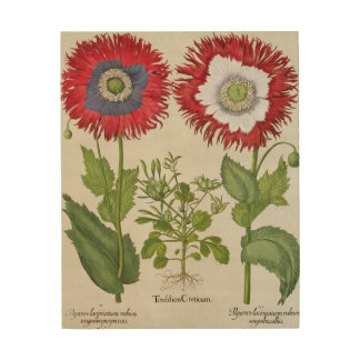 Ornamental Poppies, from the 'Hortus Eystettensis' Wood Print