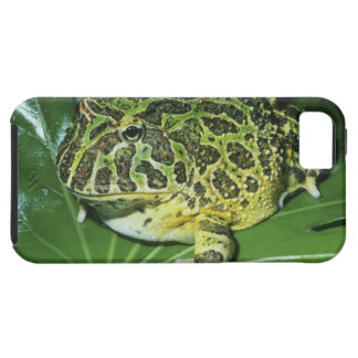 Ornate Horned Frog, (Ceratophrys ornata), iPhone 5 Covers