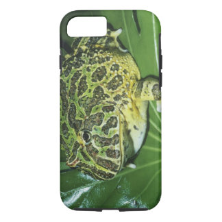 Ornate Horned Frog, (Ceratophrys ornata), iPhone 8/7 Case