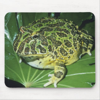 Ornate Horned Frog, (Ceratophrys ornata), Mouse Pad