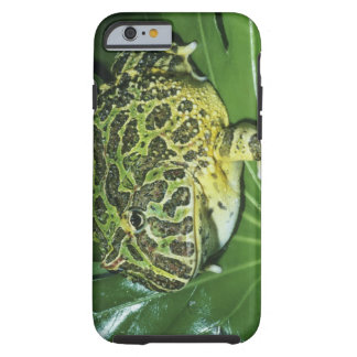Ornate Horned Frog, (Ceratophrys ornata), Tough iPhone 6 Case