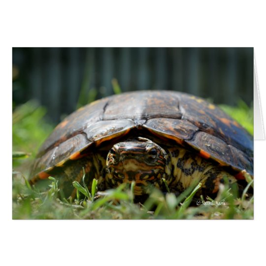 Ornate wood turtle at his level in grass card