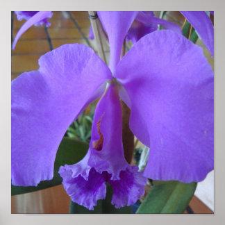 Orquídia Poster