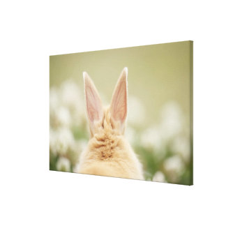 Oryctolagus cuniculus 2 gallery wrapped canvas