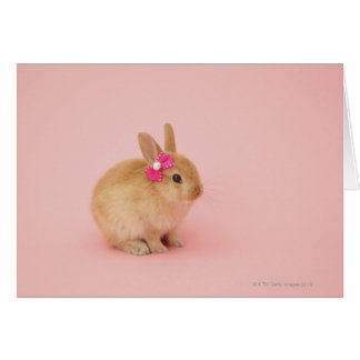 Oryctolagus cuniculus 2 greeting cards