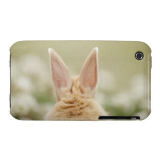 Oryctolagus cuniculus 2 iPhone 3 cover