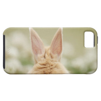 Oryctolagus cuniculus 2 iPhone 5 cover