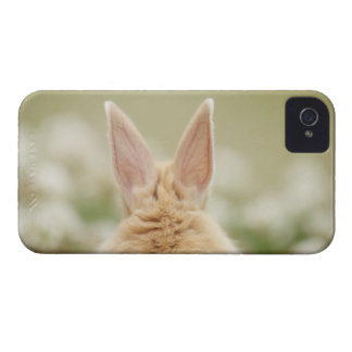 Oryctolagus cuniculus 2 Case-Mate iPhone 4 cases