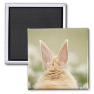 Oryctolagus cuniculus 2 square magnet