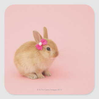 Oryctolagus cuniculus 2 square sticker