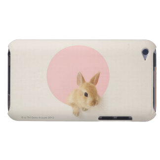 Oryctolagus cuniculus 3 Case-Mate iPod touch case
