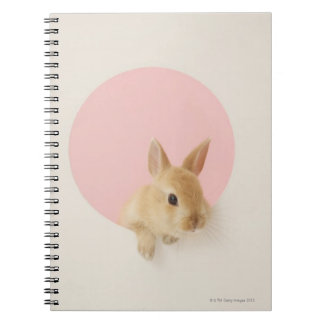 Oryctolagus cuniculus 3 note books